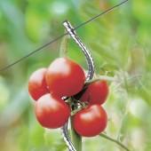 Lot de 5 Tuteurs à tomates agrippants avec chas