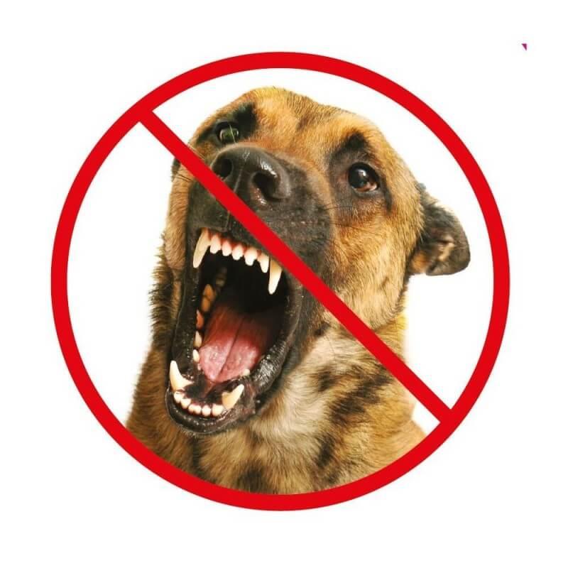 Repousse chien répulsif à ultrasons portable (3)