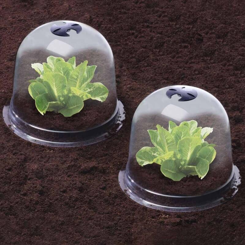 Cloches à salades plastique - Lot de 6 (4)