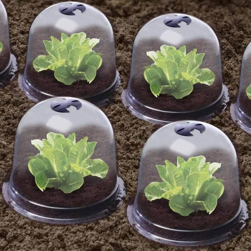 Cloches à salades plastique - Lot de 6 (5)