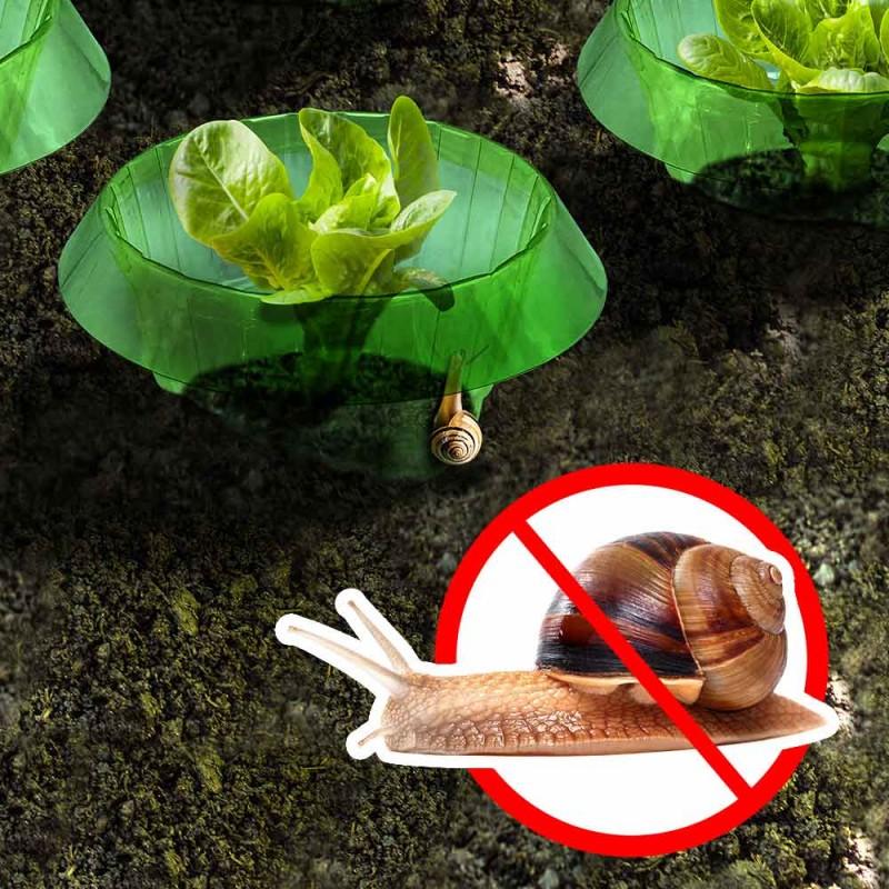 Anneaux anti limaces et escargots - x 6 (2)