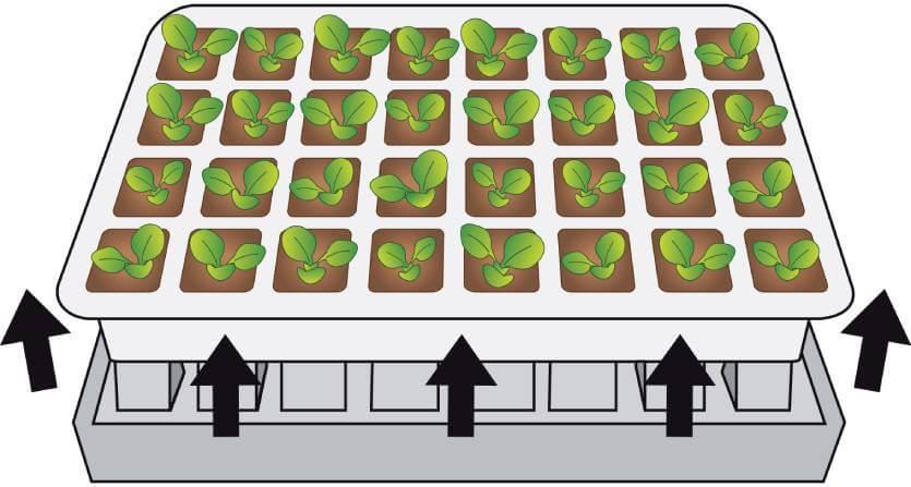 Kit de germination pour semis