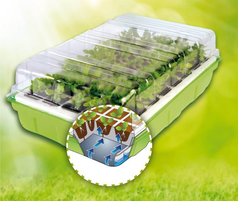 Kit germination